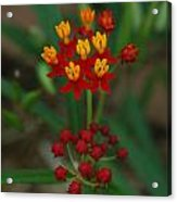 Yellow And Red Flowers Acrylic Print
