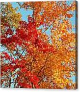 Yellow And Red Acrylic Print