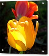 Yellow And Red Tulips Acrylic Print
