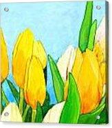 Yellow And White Tulips Acrylic Print