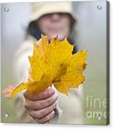 Yellow Autumn Leaf Acrylic Print