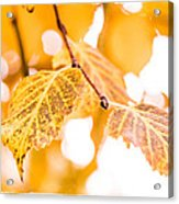 Yellow Autumn Acrylic Print
