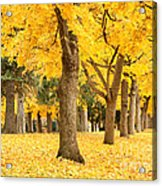 Yellow Autumn Wonderland Acrylic Print