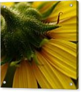 Yellow Backside Acrylic Print by Alexandra  Rampolla