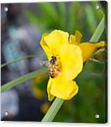 Yellow Bell Flower With Honeybee Acrylic Print