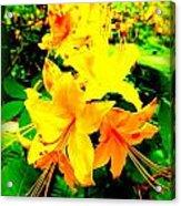 Yellow Bliss Acrylic Print