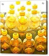 Yellow Bottle Acrylic Print