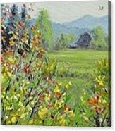 Yellow Broom Spring Acrylic Print