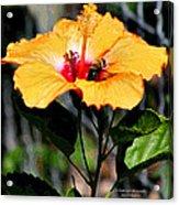 Yellow Bumble Bee Flower Acrylic Print