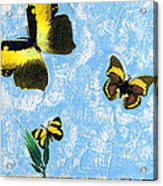 Yellow Butterflies - Spring Art By Sharon Cummings Acrylic Print