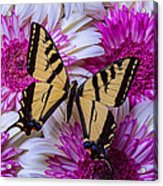 Yellow Butterfly Resting Acrylic Print