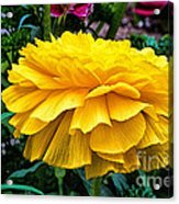 Yellow By Nature Acrylic Print