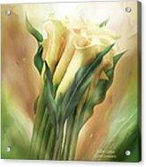 Yellow Callas Acrylic Print