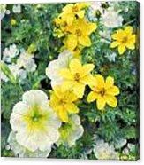 Yellow Cascade Acrylic Print