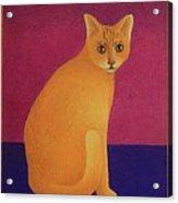 Yellow Cat Acrylic Print
