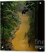 Hidden Cedar Sink Creek Acrylic Print