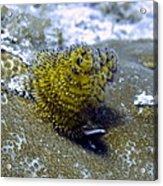 Yellow Christmas Tree Worm Acrylic Print