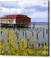 Yellow Columbia Acrylic Print