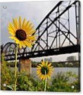 Yellow Cone Flowers And Bridge Acrylic Print
