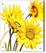 Yellow Country Wildflowers Acrylic Print