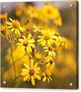 Yellow Countryside Acrylic Print