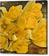 Yellow Daffodils And Texture Acrylic Print