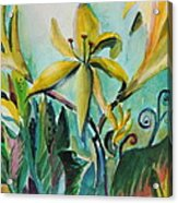 Yellow Day Lilies Acrylic Print