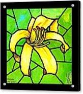 Yellow Day Lily Acrylic Print