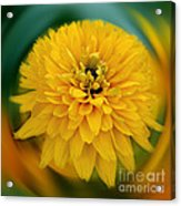 Yellow Delight Acrylic Print