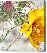 Yellow Desert Flower Acrylic Print