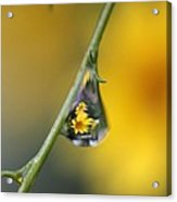 Yellow Dewdrop Acrylic Print