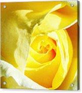 Yellow Diamond Rose Palm Springs Acrylic Print