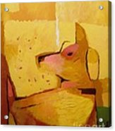 Yellow Dog Acrylic Print