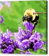 Yellow Enjoying Lavender Acrylic Print