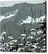 Yellow Eyes Acrylic Print