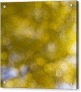 Yellow Fall Foliage Blurred Background Acrylic Print