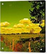 Yellow Fencerow Acrylic Print
