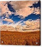 Yellow Field Dramatic Sky Acrylic Print