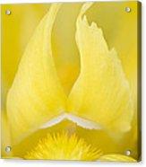 Yellow Flame - D009021 Acrylic Print