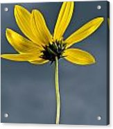 Yellow Flower Against A Stormy Sky Acrylic Print