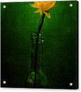 Yellow Flower In A Bottle I Acrylic Print