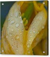 Yellow Flower In The Rain Acrylic Print by Sarah Crites