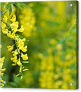 Yellow Flower In The Tree Acrylic Print