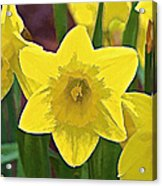 Yellow Flower Iris Acrylic Print