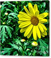 Yellow Flower Of Spring Acrylic Print