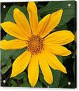 Yellow Flower Petals Acrylic Print
