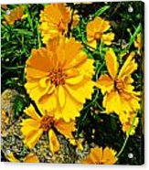 Yellow Flowers Cape Cod Acrylic Print