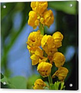 Yellow Flowers Acrylic Print