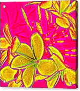 Yellow Flowers On Pink Background Acrylic Print