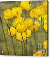 Yellow Flowers With Texture Acrylic Print